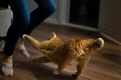 Kuva tanssivista jaloista ja kissasta