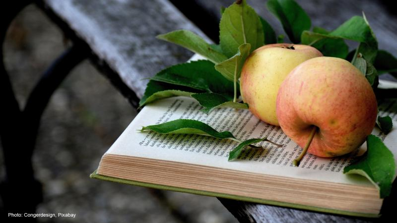 A book, apples and park bench