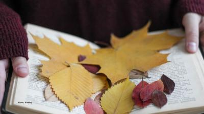 Autumnal leaves on top of the open book.