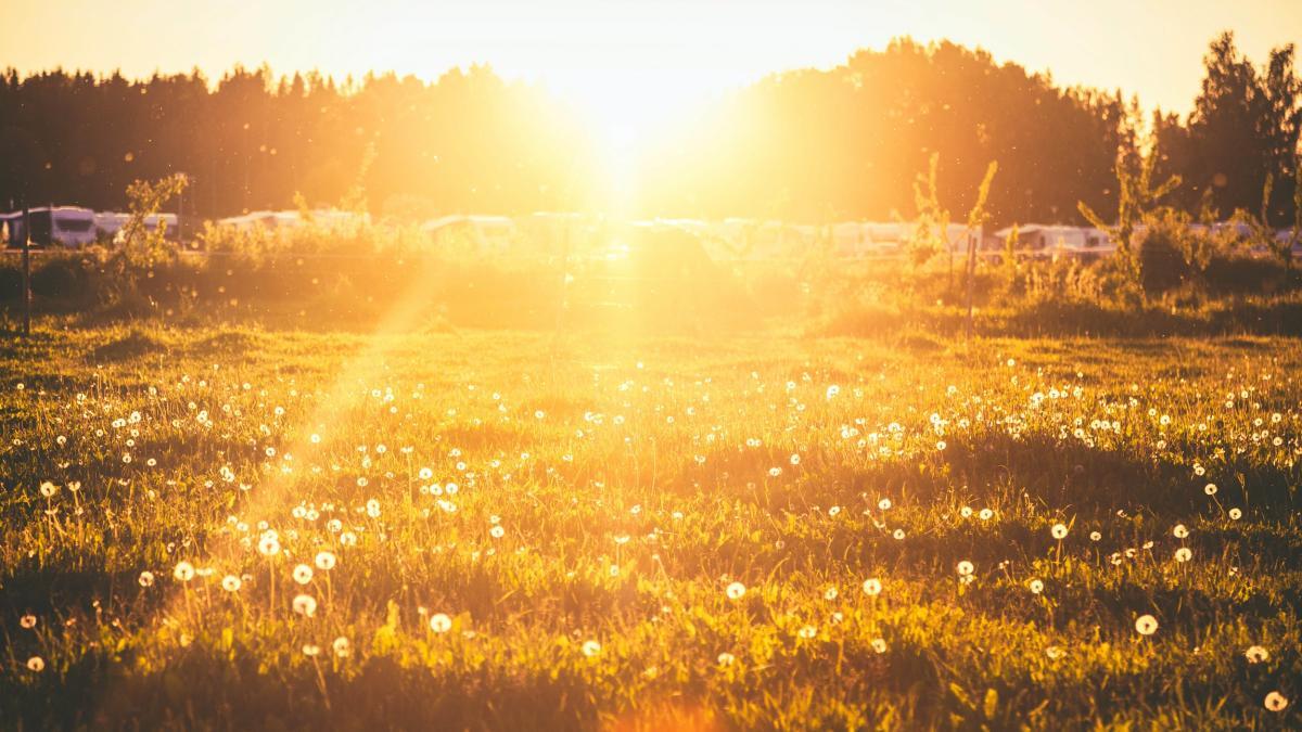 Kesäinen niitty auringonlaskun aikaan.